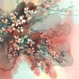 Ветви Сакуры в предпосылке акварели цветеня Стоковое Фото