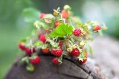 Ветви свежей одичалой одичалой клубники на старой древесине журнала Стоковые Изображения