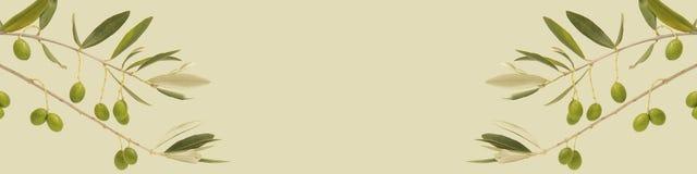 2 ветви свежих зеленых оливок Стоковая Фотография RF