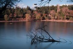 Ветви силуэта в озере Стоковые Изображения RF