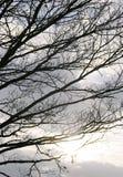 Ветви силуэта Стоковое Изображение RF
