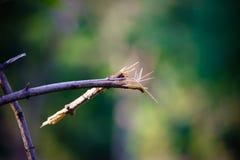 Ветви сломленного trees-2 Стоковые Изображения
