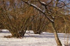 Ветви, снег и солнце - Франция Стоковое Изображение