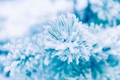 Ветви сосенки предусматриванные в снежке Стоковая Фотография RF