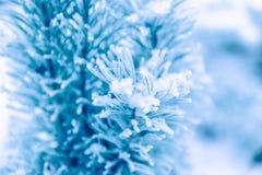 Ветви сосенки предусматриванные в снежке Стоковое фото RF