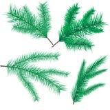 Ветви сосны и спруса Стоковые Изображения