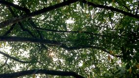Ветви старого дерева в парке сток-видео