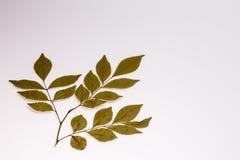 Ветви сухих листьев Стоковое Фото