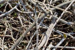 ветви сушат Стоковое Фото
