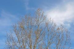 Ветви с желтыми бутонами Стоковые Фото