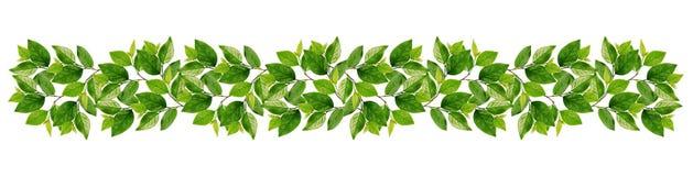 Ветви с зелеными листьями в гирлянде Стоковые Фото