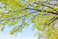 Ветви с красочными листьями против неба Стоковое Фото