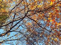 Ветви с красочными листьями Стоковая Фотография