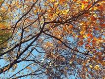 Ветви с красочными листьями autum Стоковая Фотография