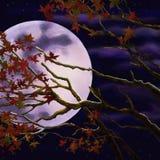 Ветви с листвой осени на предпосылке луны ночи иллюстрация штока