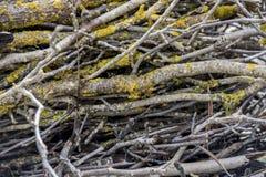 Ветви с мхом Стоковая Фотография RF