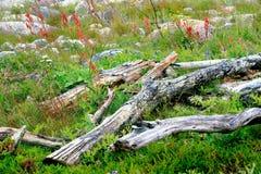 Ветви сложенные вверх в зеленой траве Стоковое Изображение RF