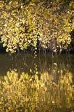 Ветви с цветами падения Стоковая Фотография RF