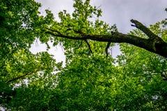 Ветви танцуя в небе Стоковое Изображение