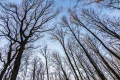 Ветви дуба Стоковое фото RF