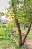 Ветви упали после того как шторм прошел Стоковая Фотография