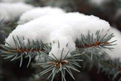 Ветви хвои покрытые с изморозью Стоковые Фото