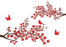 ветви цветения Стоковое Фото