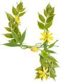 ветви цветут номер 4 листьев Стоковое Изображение