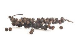 Ветви черного перца стоковое фото rf