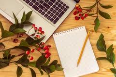 ветви чистого листа бумаги, карандаша и зверобоя на деревянной предпосылке Стоковое Изображение RF