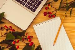 ветви чистого листа бумаги, карандаша и зверобоя на деревянной предпосылке Стоковое Изображение