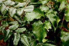 ветви ягоды черные Стоковые Фото