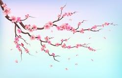 Ветви Японии Сакуры при цветки вишневого цвета и падая лепестки изолированные на белой предпосылке vector иллюстрация иллюстрация вектора