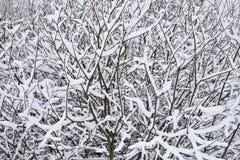 Ветви 1 Стоковая Фотография RF