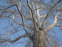 ветви Стоковое Фото