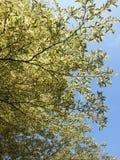 Ветви Стоковые Фотографии RF