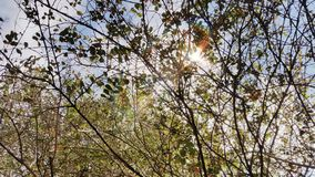 Ветви Стоковое Изображение RF