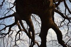 Ветви Стоковая Фотография