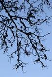 Ветви Стоковые Фото