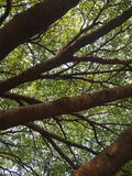 Ветви Стоковое фото RF