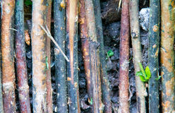 Ветви Стоковые Изображения RF