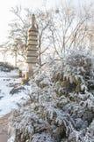 Ветви Arborvitae покрытые с изморозью в парке Стоковые Фотографии RF