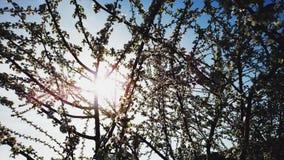 Ветви blossoming дерева против голубого неба Стоковые Изображения