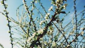 Ветви blossoming дерева против голубого неба Стоковая Фотография RF