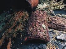 Ветви Coniferous и дуба лежат на таблице стоковое изображение