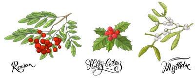 Ветви Rowanberry с листьями и ягодами, омелой и ягодой падуба Эскиз руки вычерченный, цвет doodle вектора бесплатная иллюстрация