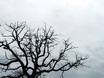 ветви silhouetted вал Стоковые Фотографии RF