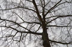 ветви silhouetted вал Стоковое фото RF