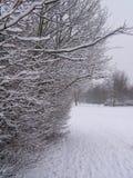 Ветви Snowy Стоковое Фото