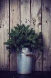 ветви spruce Стоковые Изображения RF